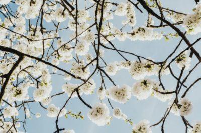 Anzeichen und Symptome von Allergien