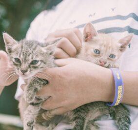 Was kann man gegen eine Katzenallergie tun?