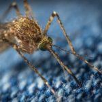west nil virus immunität