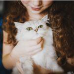Katzen und Tierarztbesuch