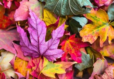 Farbenblindheit: Symptome, Ursachen, Diagnose und Behandlung