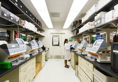 Studie: DNA-basierte Nanogele können bei Chemotherapie die Nebenwirkungen verringern